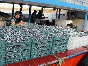 Doğu Karadeniz'de 107 bin ton hamsi avlandı