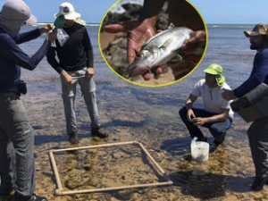 Brezilya'daki petrol sızıntısı deniz canlılarını tehdit ediyor