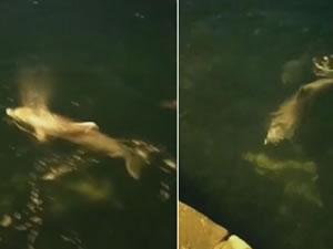 Ortaköy Sahilinde yunuslar görüldü