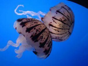 Deniz canlılarının sayımı tamamlandı