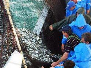 Balıkçılar, Denizcilik Bakanlığı istedi