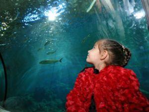 Deniz Dünyası'nı 100 bin kişi ziyaret etti