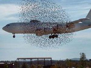ABD'de uçak kuş sürüsünün arasında kaldı