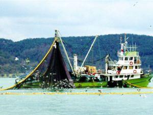 Balık stokları 2050 yılına kadar tükenebilir