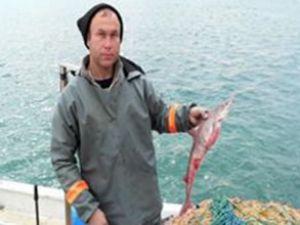 Saros Körfezi'nde köpekbalığı bolluğu