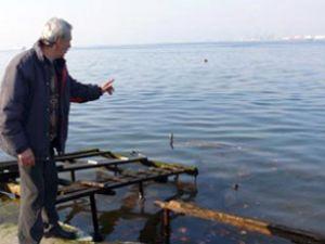 Gölcük sahili petrol atığıyla kaplandı