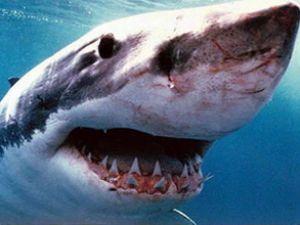 Onbinlerce köpekbalığı şaşkına çevirdi