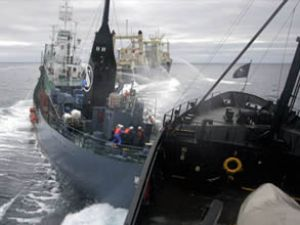 Japonya, Antartika'daki balina avını askıya aldı