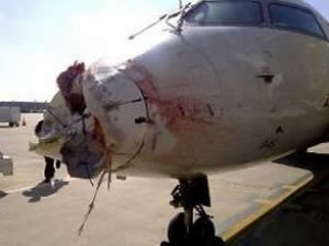 Leyleklere çarpan uçak kan içinde kaldı