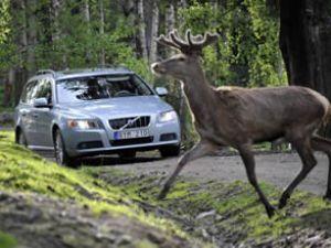 Volvo'dan aktif güvenlikte yeni bir adım