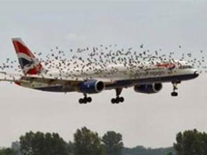 AHL, kuşlarla mücadele için çalışmalar yapıyor
