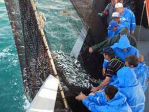 Türkiye, balık üretiminde Avrupa ikincisi