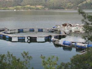Su ürünleri tüketimi ve ihracatı artıyor