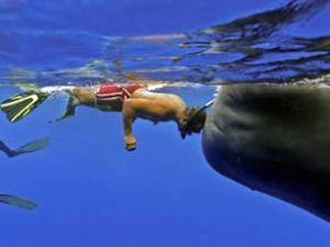 50 tonluk balinayla kafa kafaya poz verdi