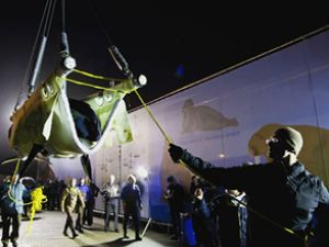 1.4 tonluk balina uçakla transfer edildi