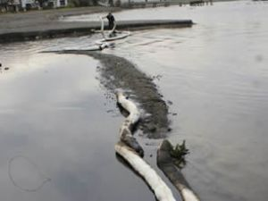 Sapanca Gölü'nde çevre felaketi yaşandı