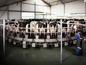 Kasım ayında süt üretimi azaldı