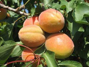 Meyve sebzede 1 milyon istihdam hedefi