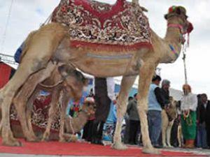 Sarkozy'e 'develerimi geri verin' davası!