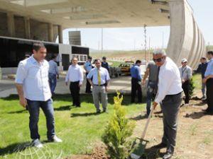 Batman Havalimanına 3 bin ağaç dikildi
