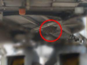 Atatürk Havalimanı apronunu arılar bastı