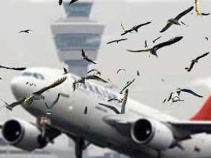 THY uçağına AHL'den kalkışta kuş çarptı