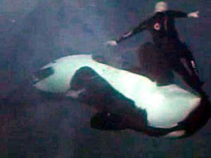Katil balina eğitmeni ölümden dönmüş