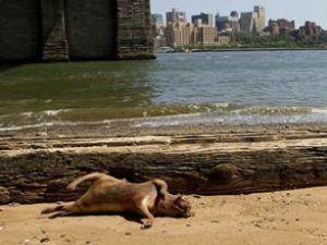 Sahile vuran gizemli yaratık korkuttu!