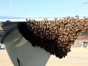Delta Havayolları'nda arı kalkışı engelledi