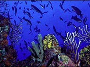 Büyük Okyanus'taki tehlike korkutuyor