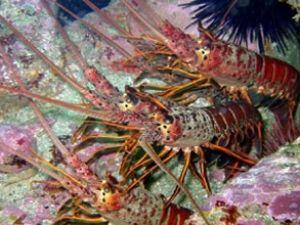Gıda zincirine bir darbede okyanuslardan