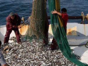 Marmara'da algarna avcılığı yasaklanacak