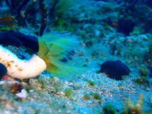 Marmaris'te deniz atındaki cennet