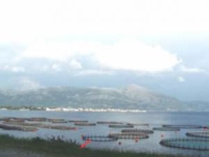 'Kültür Balıkçılığına Destek Olun' çağrısı
