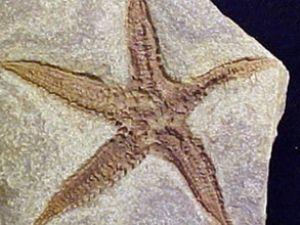 Çantada 60 milyon yıllık deniz yıldızı fosil