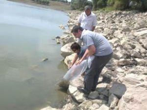 Eğirdir Gölü'ne 250 bin yavru sazan bırakıldı