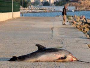 Çanakkale'de yunusu tüfekle öldürmüşler