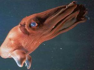 Bu cavanar okyanusun tabanında yaşıyor