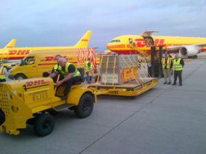 DHL, 2 Sumatran kaplanını Londra'ya taşıdı