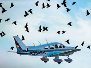 3.havalimanı için kuş göç yolları analizi