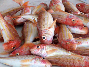 Ege'de avlanan balığın kilo fiyatı 100 liraya kadar yükseldi