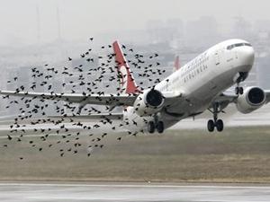 Kuş tehlikesine ihaleli çözüm