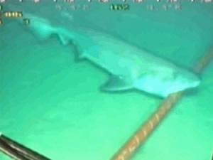Köpekbalıkları Google'yi zarara uğrattı