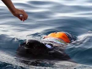 Akdeniz'de kaçak göçmen teknesi battı: 20 ölü, 150 kayıp