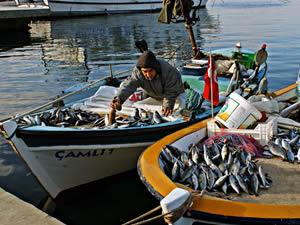 Balıkta av sezonu başlıyor