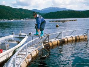 Kültür balıkçılığında üretim 4 katına çıktı