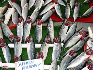 Balık sezonu bereketli açıldı : 50 ton palamut