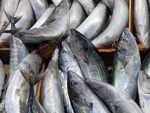 Balık bollluğu fiyatları düşürdü!