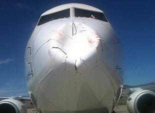 THY uçağına kuş sürüsü çarptı