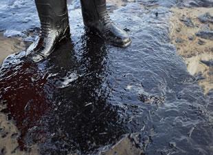 Kaliforniya'da binlerce varil petrol okyanusa sızdı